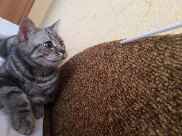 Знакомьтесь: Пуфик. Кот, Знакомства, Жизнь, Длиннопост