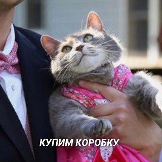 Дела семейные Кот, Любовь, Семья