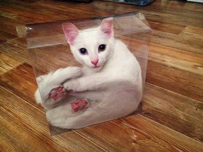 Жидкие коты Коты это жидкость, Imgur, Кот, Длиннопост