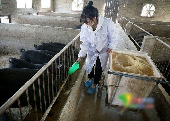 300 свиней в придачу к красавице! Китай, Приданное, Девушки, Длиннопост