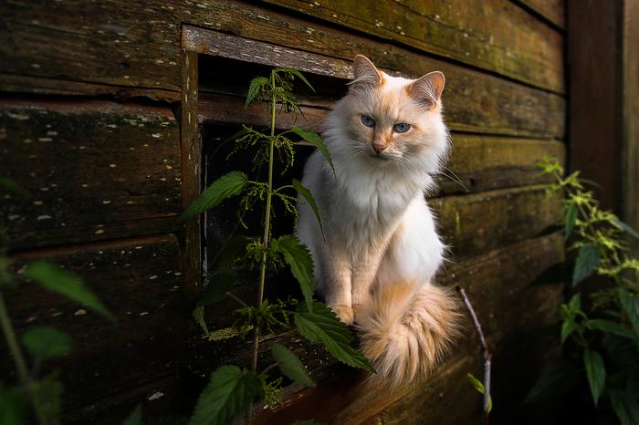 Гадкий котёнок Длиннопост, Кот, Фотография, Животные, Люди, Подкидыш