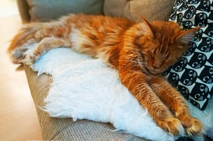 Хорошая подушка - залог крепкого сна.))