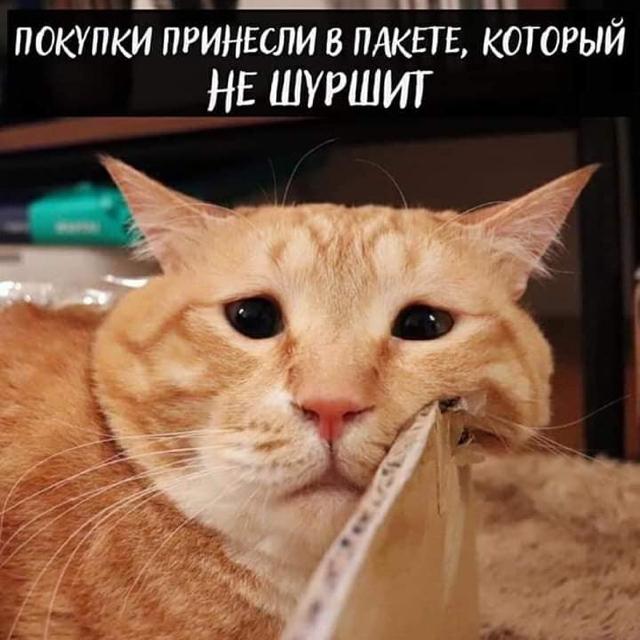 Когда же это все закончится ) Кот, Котомафия, Длиннопост