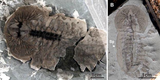 В Китае найдены тысячи неизвестных науке окаменелостей Палеонтология, Находка, Окаменелости, Длиннопост