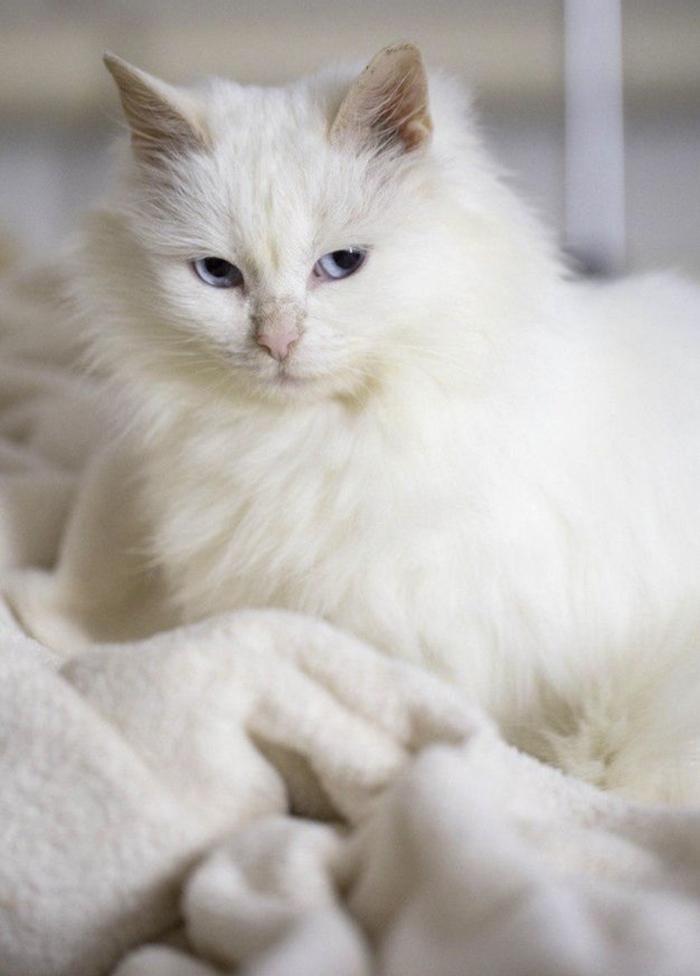 Подобрали кошечку 4 недели назад:) Без рейтинга, Кот, Помощь, В добрые руки, Животные, Длиннопост