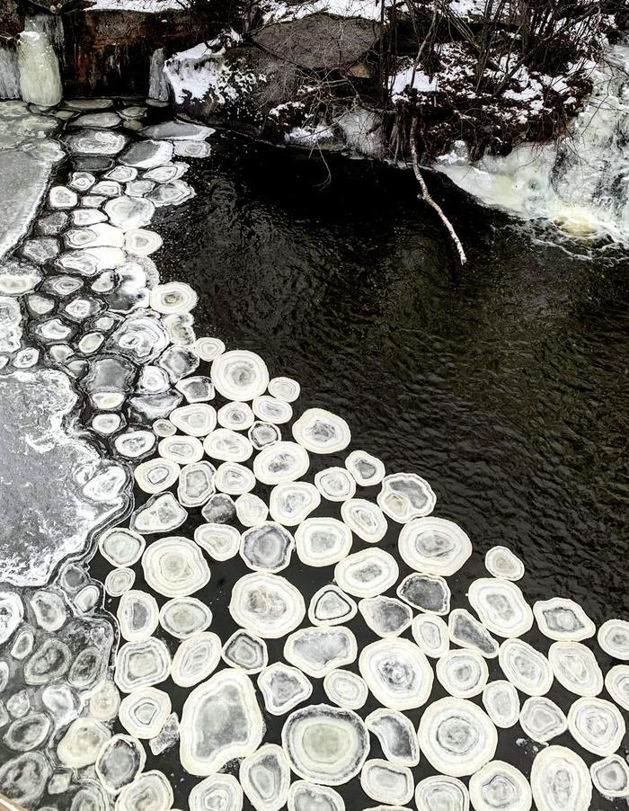 """""""Плавающие ледяные блинчики увидел сегодня на озере"""""""