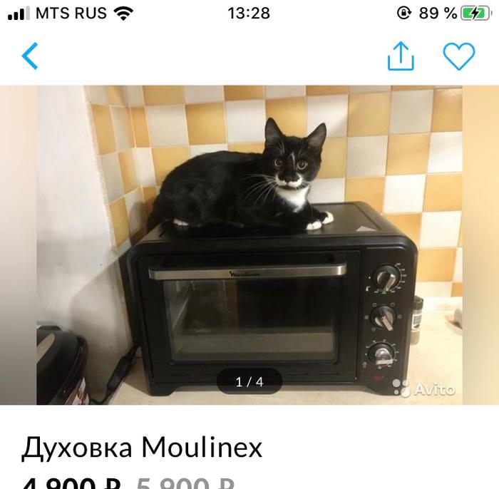 Котик-продажник Кот, Авито, Милота, Длиннопост