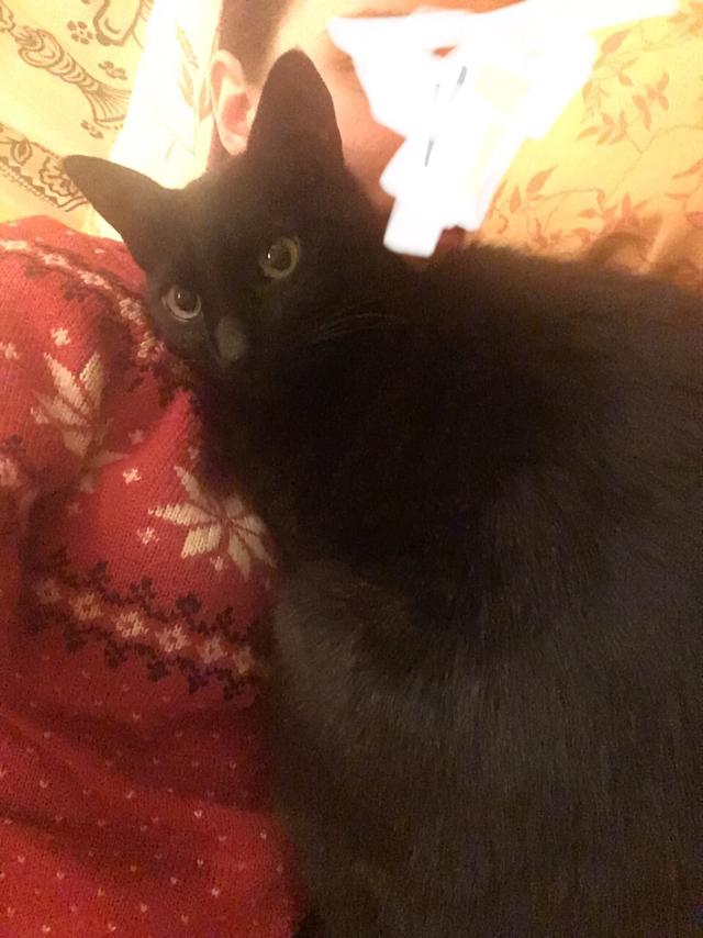 Пропал кот Без рейтинга, Кот, Потеряшка, Санкт-Петербург, Потерялся кот