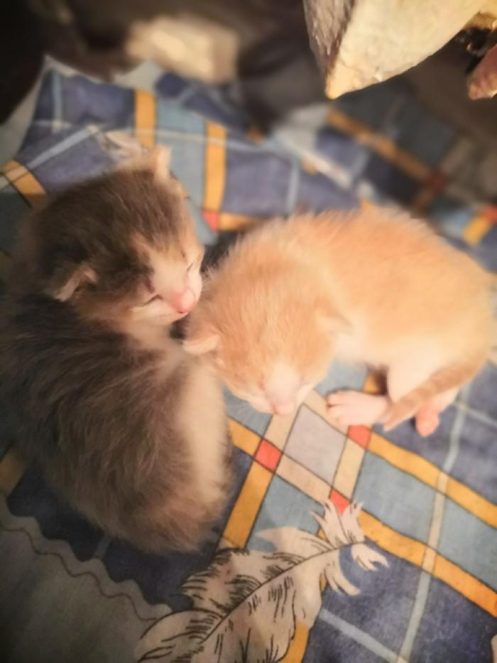 Котята ищут дом В добрые руки, Теплый дом, Александров, Кот, Без рейтинга, Длиннопост