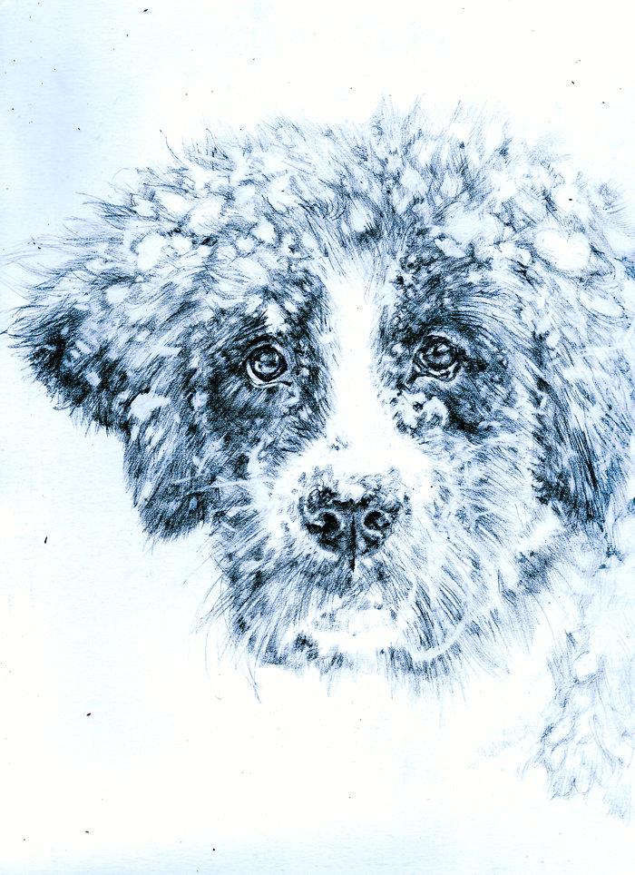Собака в снегу, рисунок