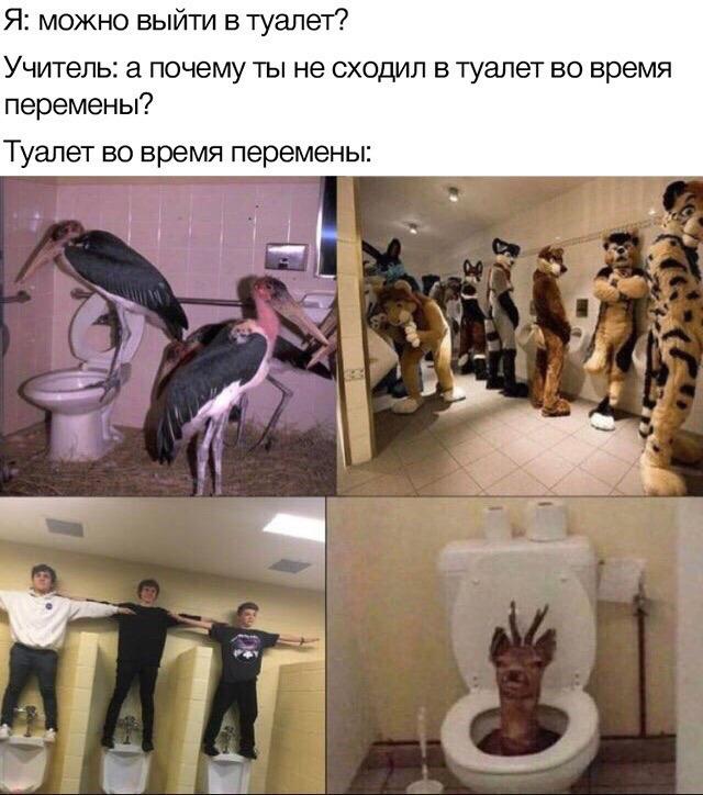 Туалет в школе :D