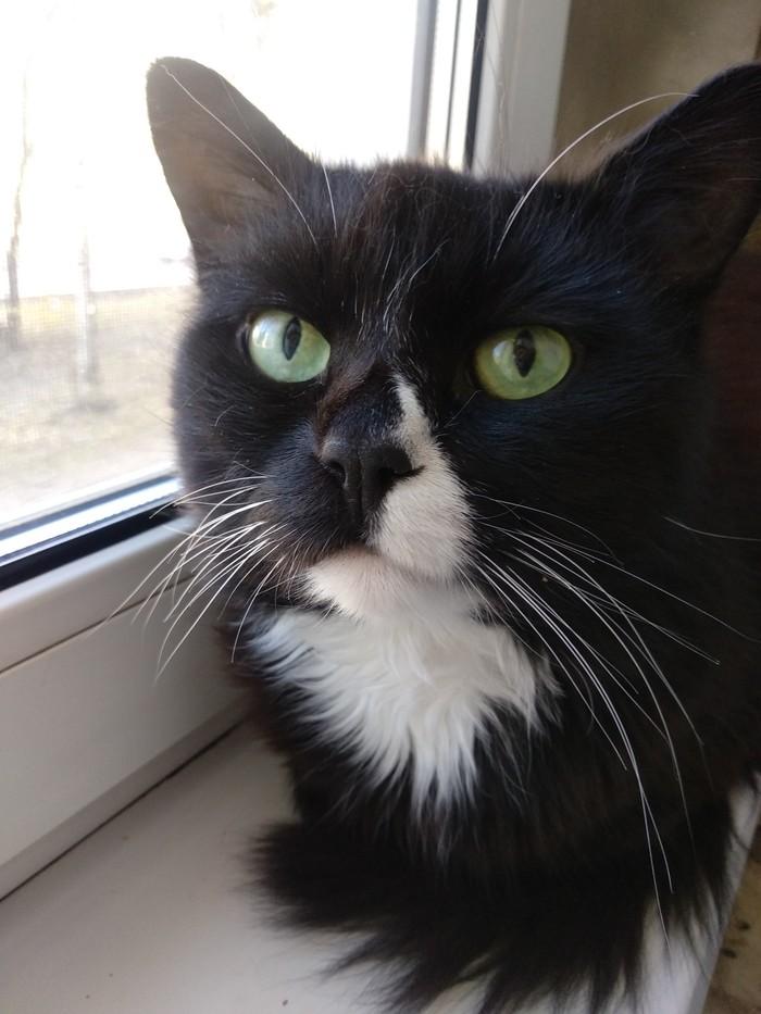 Котик ищет новый дом Без рейтинга, В добрые руки, Хабаровск, Кот, Длиннопост