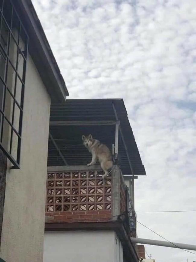 Ну допустим мяу Собака, Вьетнам, Длиннопост