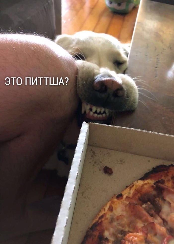 Любитель пиццы