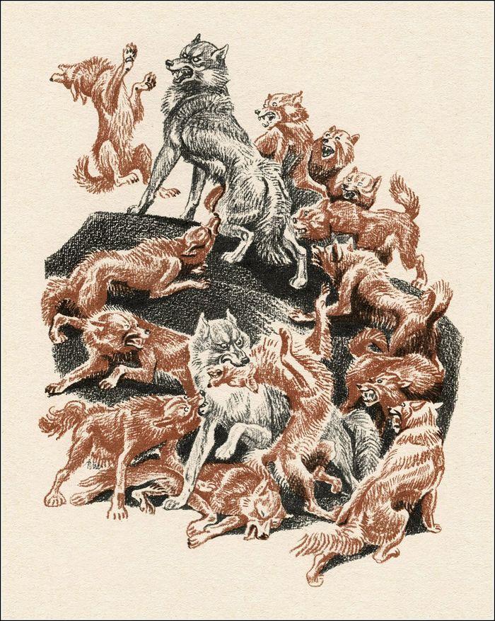 """Рыжие собаки из """"Маугли"""" - кто это? Маугли, Книга джунглей, Красный волк, Природа, Интересно узнать, Длиннопост"""