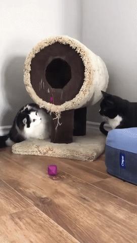 Приучаем кота к новому домику