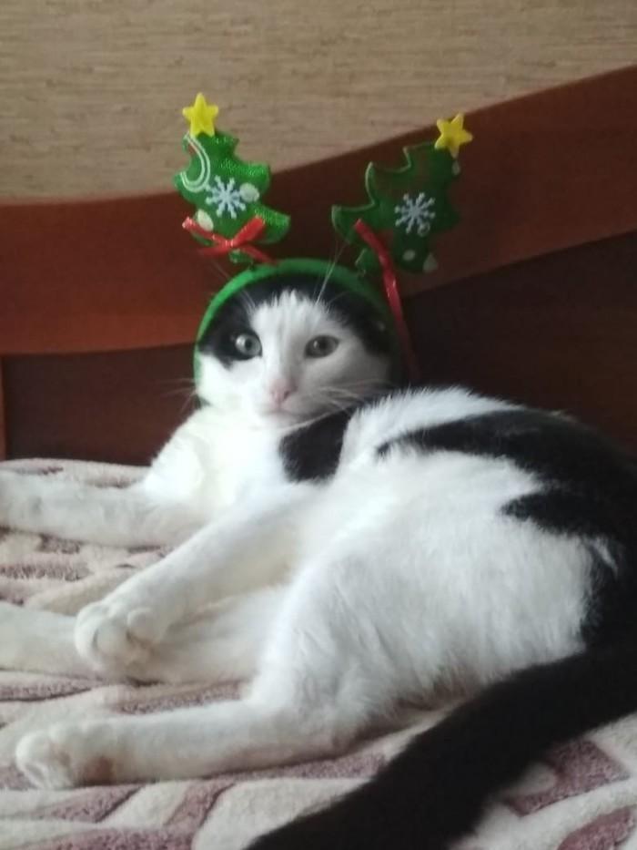 А спонсор моего новогоднего настроения...