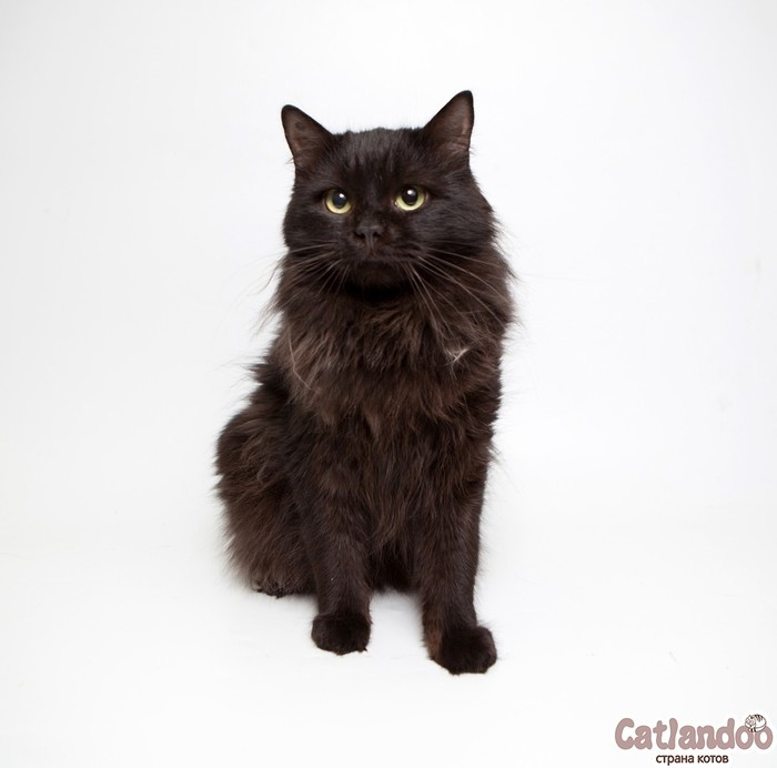 Неотразимый котик Агат ищет семью!