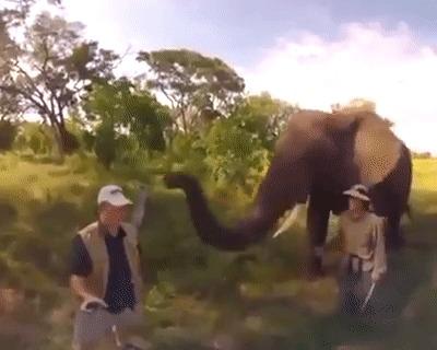 Большие - маленькие хулиганы))) Слоны, Слоненок, Милота, Гифка, Животные, Поджопник, Пинок, Кепка, Хобот, Примерка