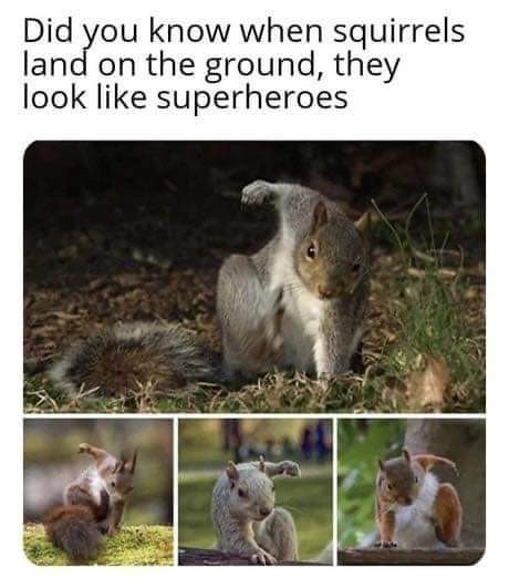 Супербелки