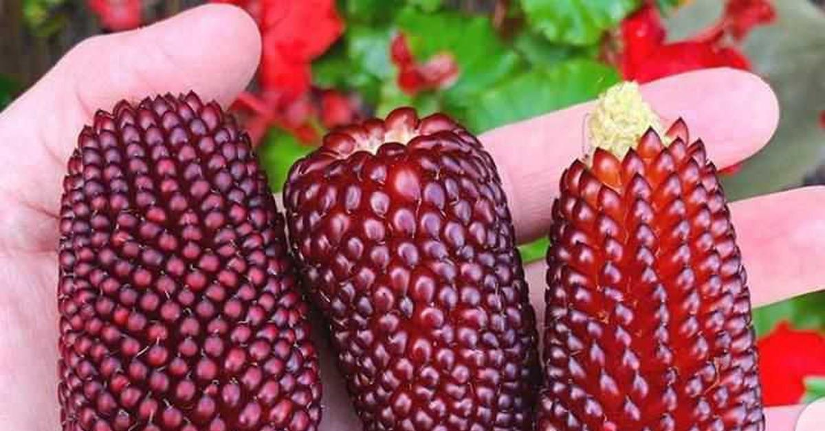 Рецепт приготовления кукурузы запеченной в пизде