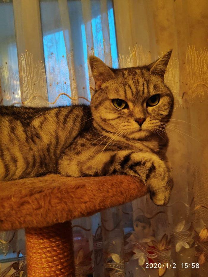 Кошку, прожившую всю жизнь в одной семье, невзлюбила невестка... Кот, Москва, Предательство, Бездомные, Длиннопост, Без рейтинга, В добрые руки