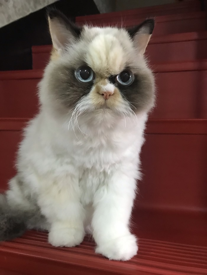 Разве я выгляжу сердитым?