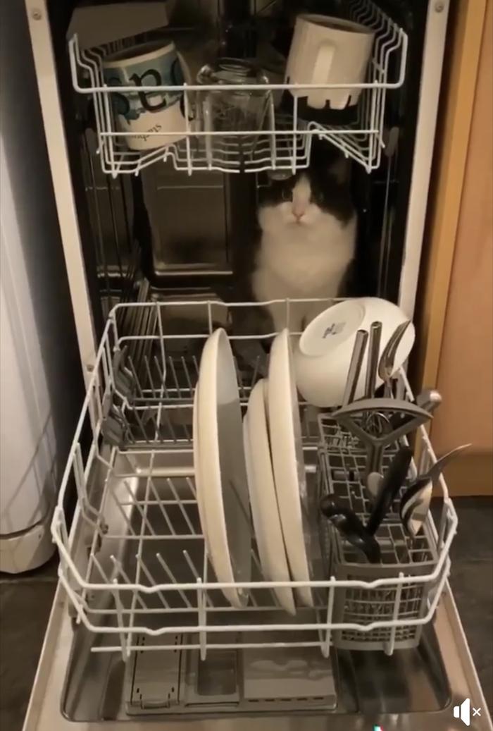 Так вот как работает посудомойка- внутри сидит кот и моет