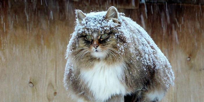 Нам нестрашен снегопад!