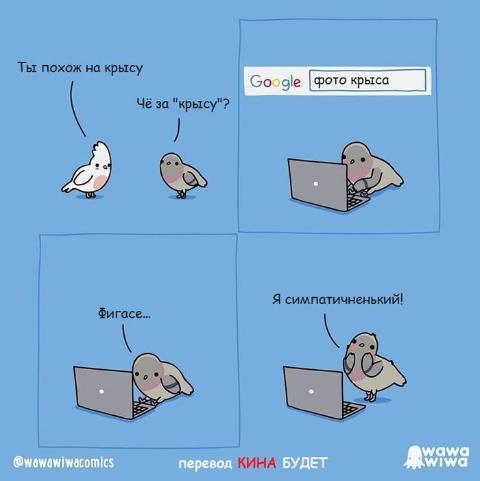 Про голубя. Голубь, Попугай, Крыса, Интернет, Комиксы, Wawawiwa