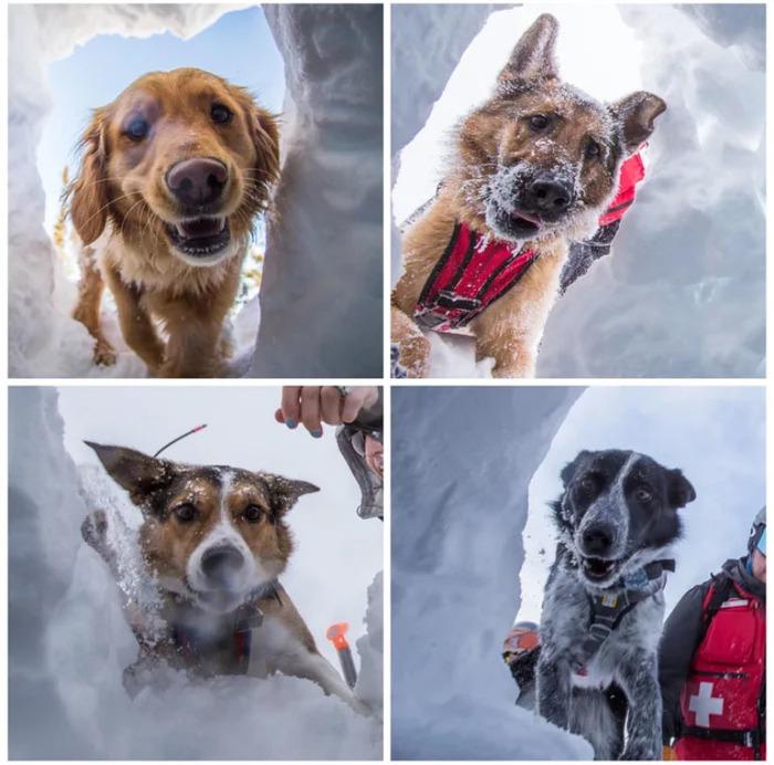 Хорошие мальчики тренируются искать людей под снегом