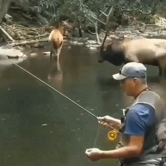 Гармония Олень, Рыбалка, Рога, Гифка