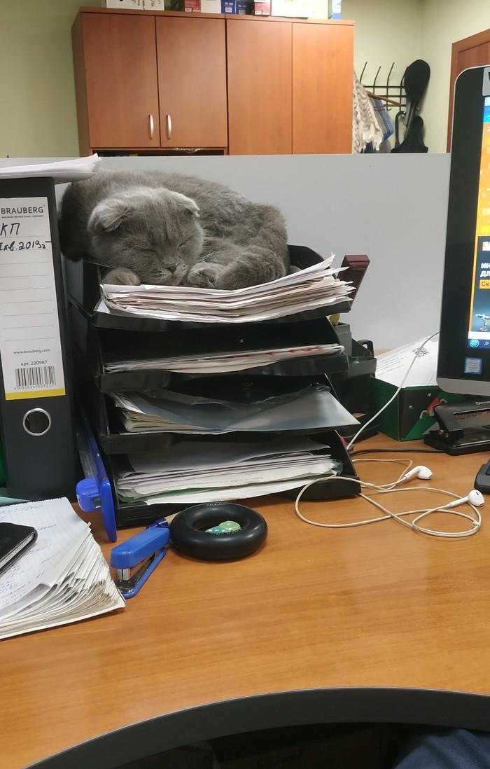 Офисный работник, v2.0