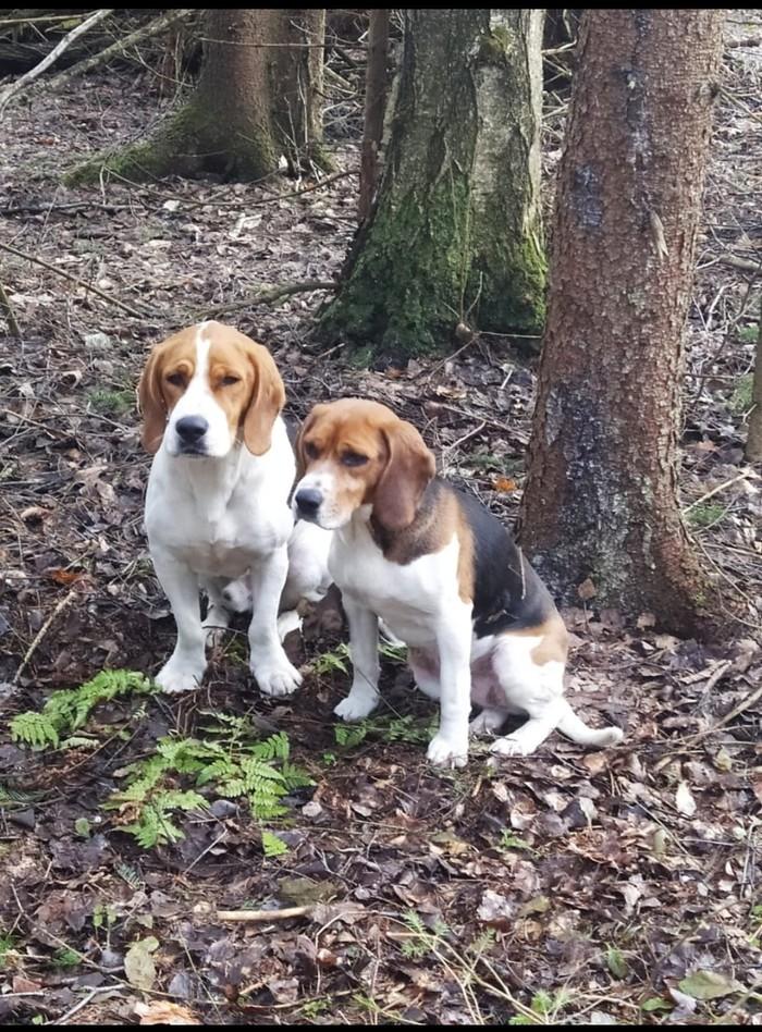 Найдены собаки