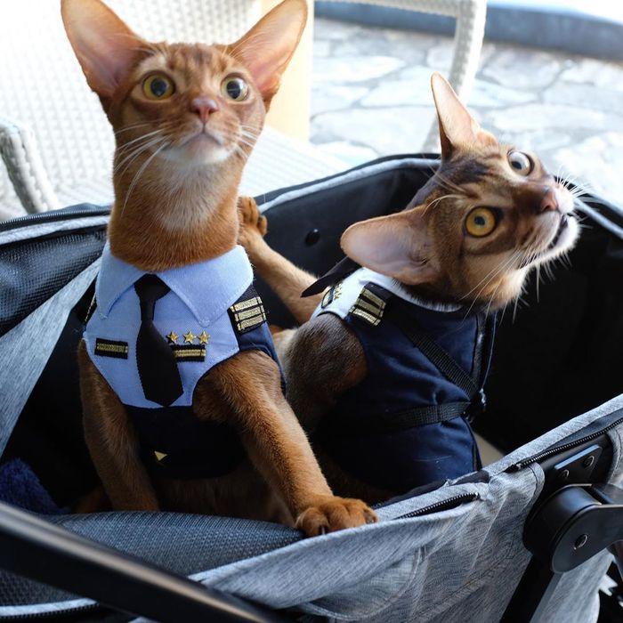 Пилот и штурман
