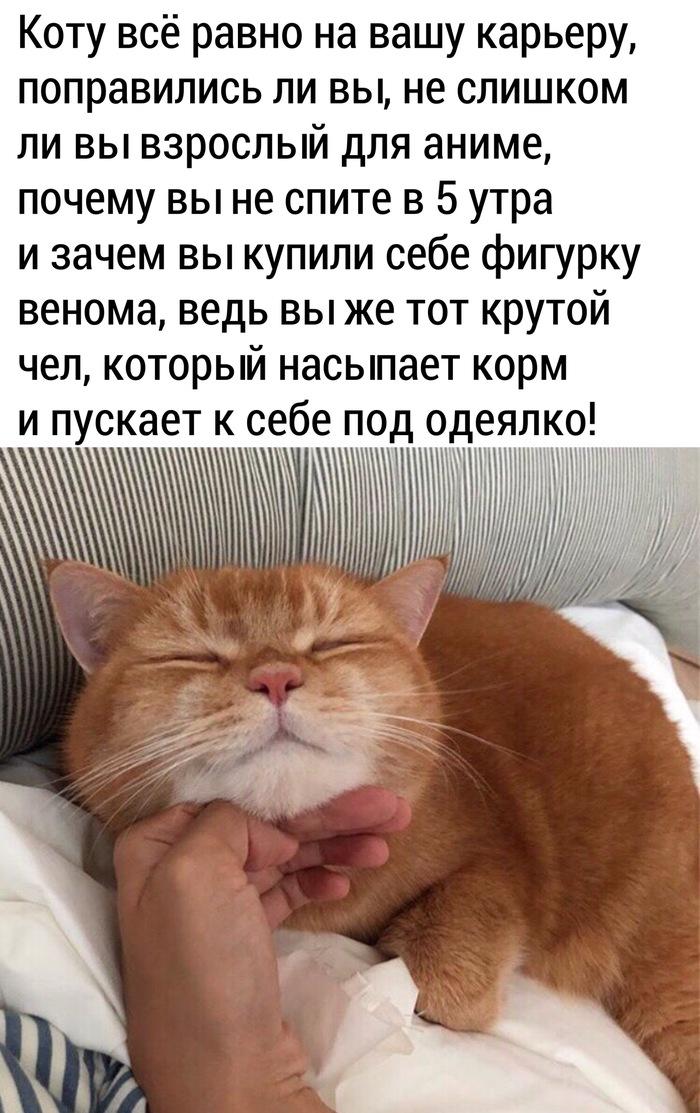 Котам пофиг