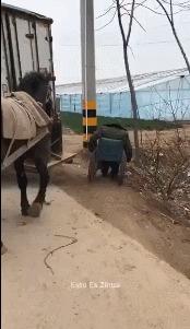 Хороший мальчик Лошади, Инвалид, Гифка