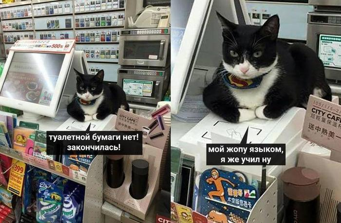 Кот кассир