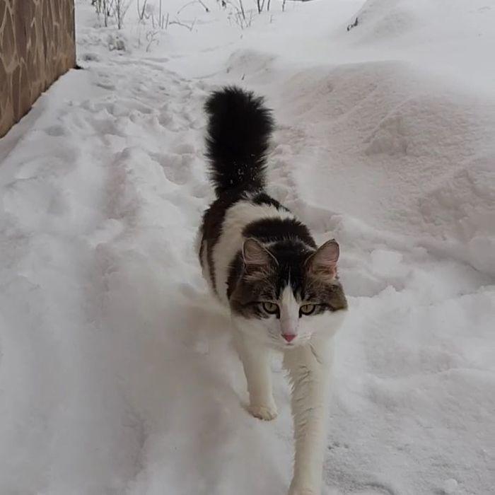 Прошу помощи! Потерялся кот! Казань!