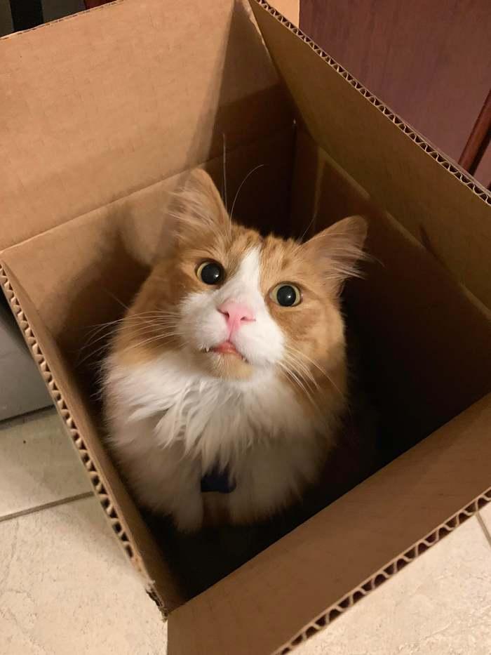 Пятничный котик...
