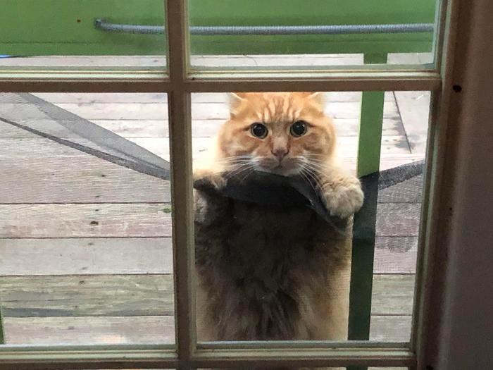 Привет соседи...