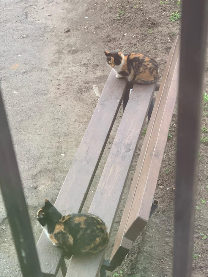 Даже коты понимают что соблюдать дистанцию - важно