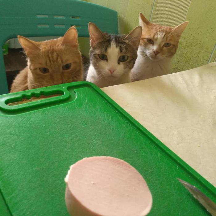 Организованная кошачья группировка