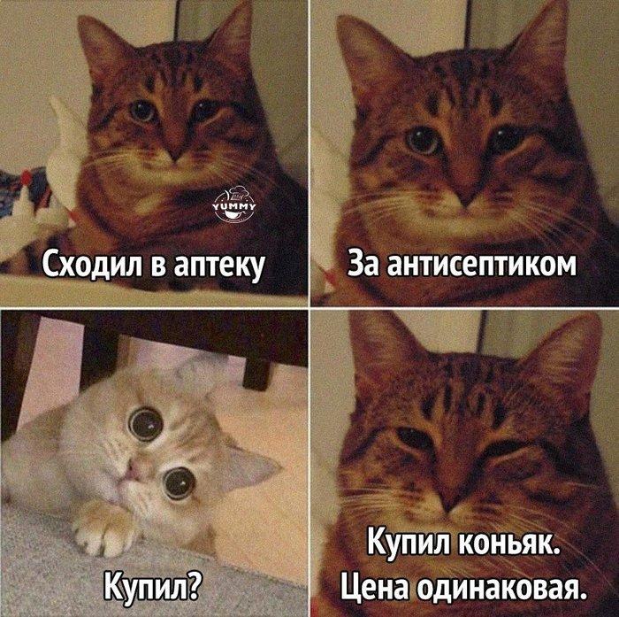 https://cs10.pikabu.ru/post_img/2020/04/14/0/1586813199171883228.jpg