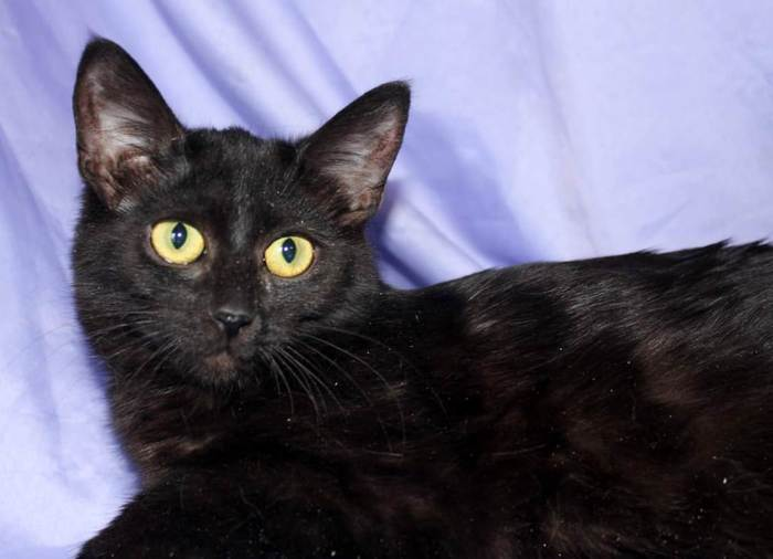 Ищем дом котёнку девочке Ирме