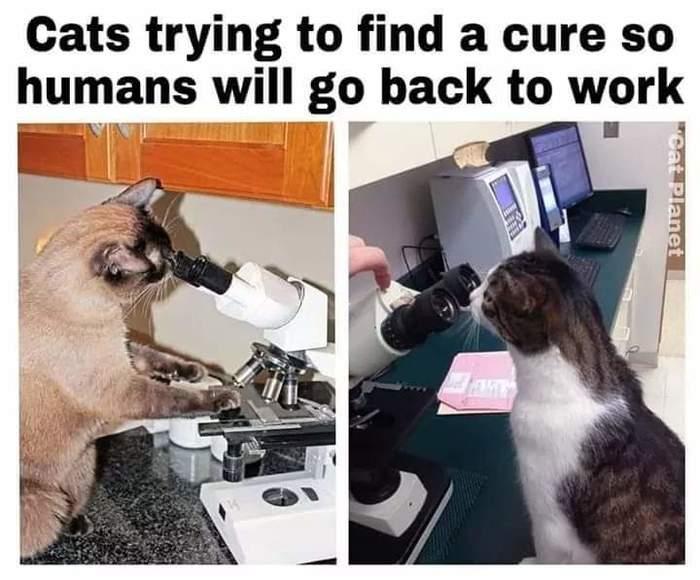Коты пытаются найти лекарство, чтобы человечишки вышли работать