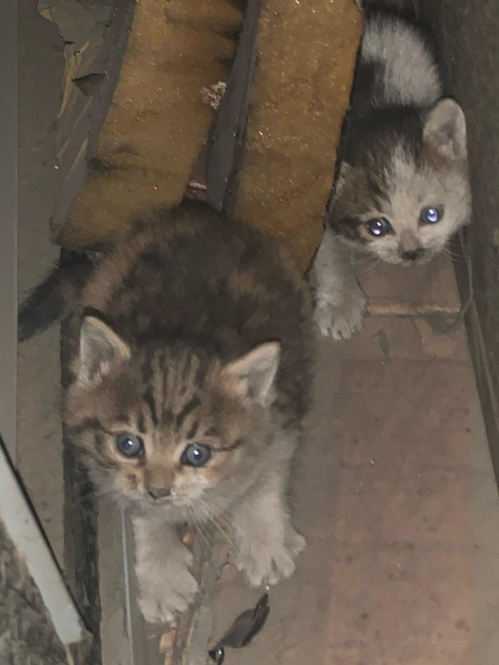 госпожа трахает бездомные котята фото с адресом решение стало