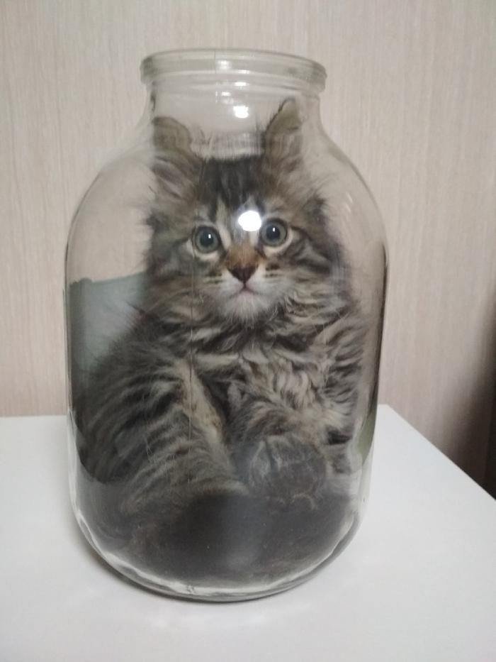 того, живая открытка кошка в банке оформить заказ