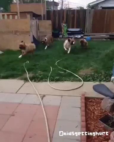 Хорошие мальчики на прогулке