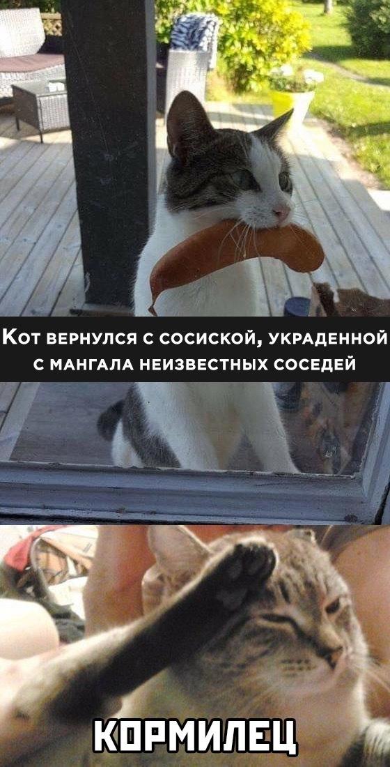 Когда кот реально полезен